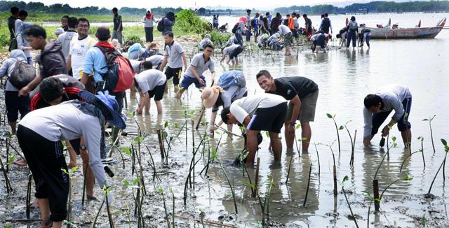 174 Mahasiswa PPG SM-3T  Unnes Tanam Mangrove di Pantai Tapak