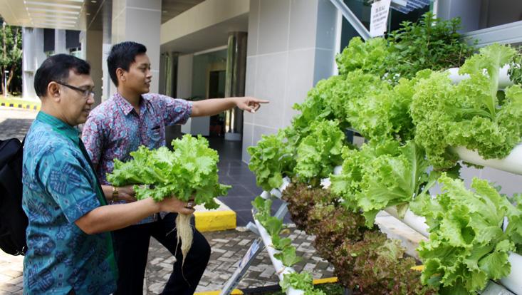 Ingin Sayuran Sehat Tanpa Pestisida, Datang Aja ke LP2M UNNES