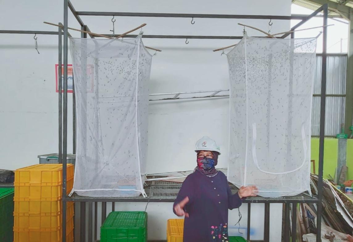 Keresahan Permasalahan Sampah Organik, UNNES Ciptakan TPST dan Budidaya Maggot