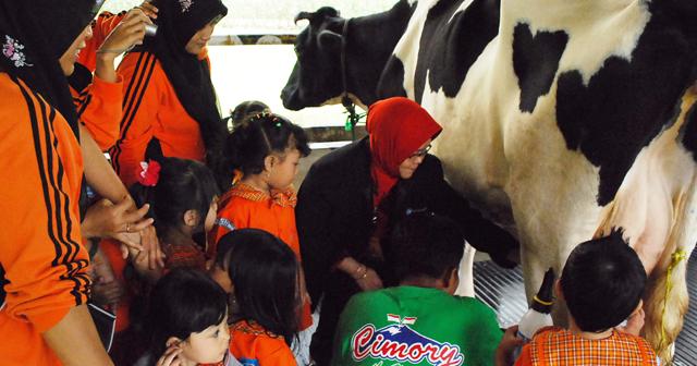Siswa PAUD Labschool Unnes Belajar Mengolah Susu Sapi